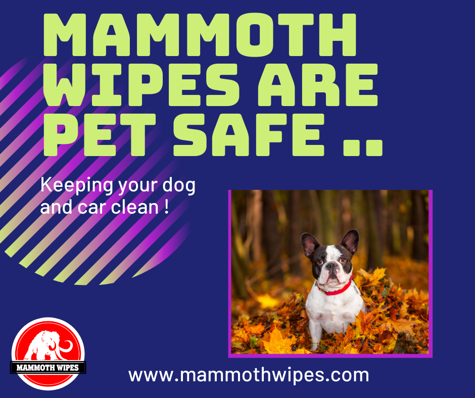 Pet Safe Wipes from Mammoth